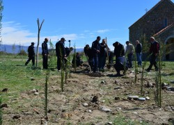 Planting of trees in Shindisi